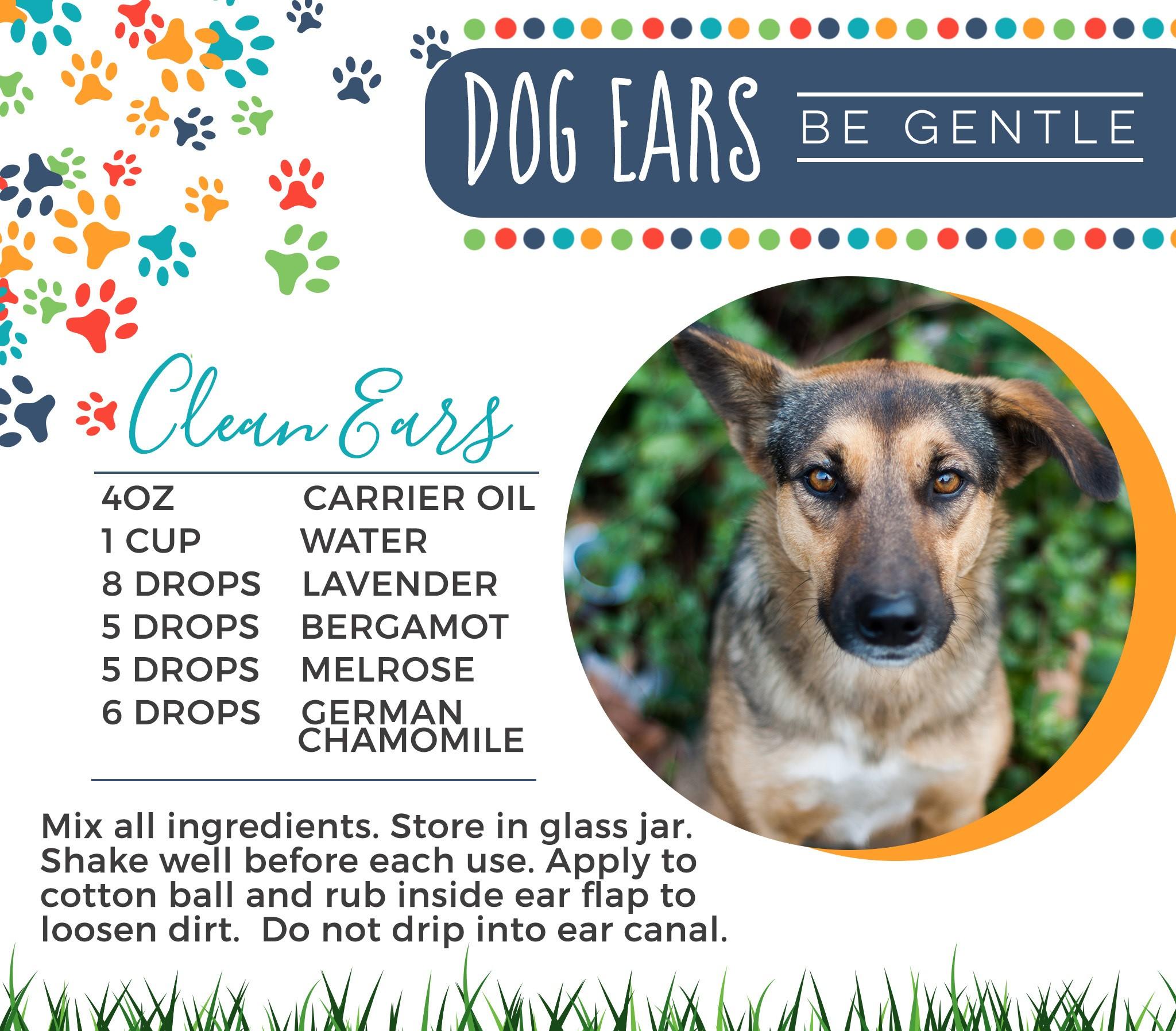 21-Dogs-Clean-Ears.jpg