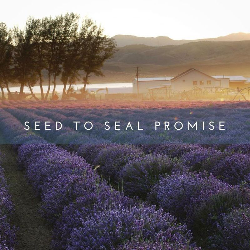One of the Young Living Lavender Farms
