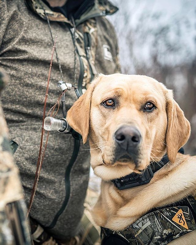 The loyalty of a good dog cannot be replaced. #dogsofinstagram #mansbestfriend #huntingdogs