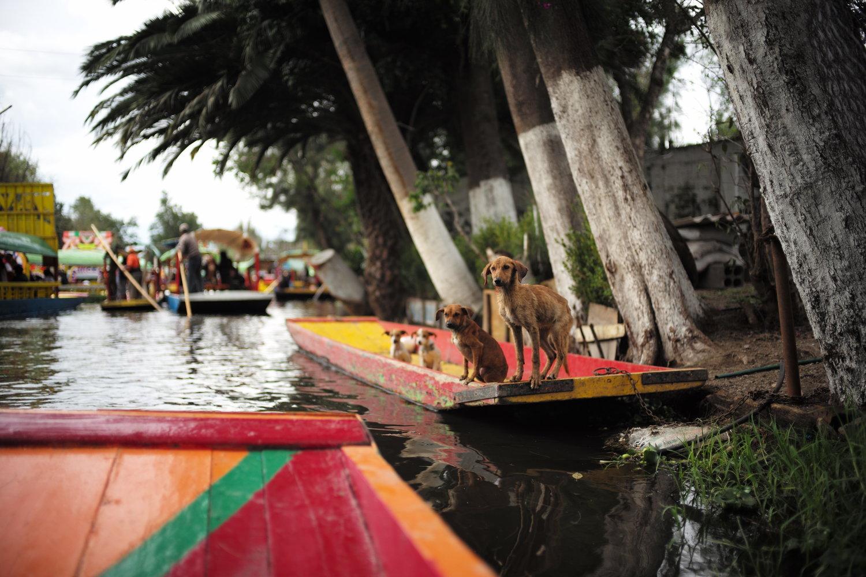 Xochimilco, Mexico 2018