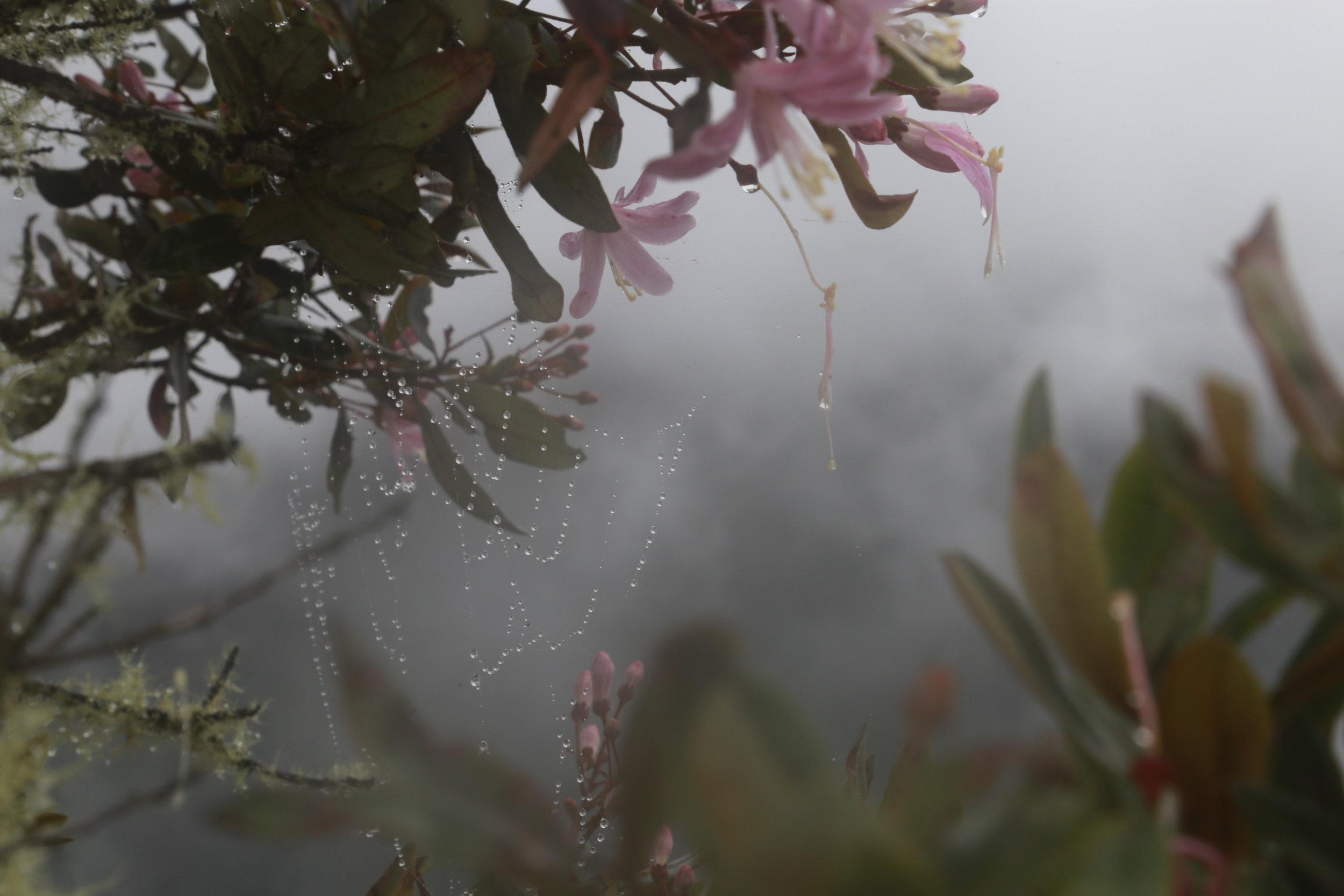 Foggy view from Waynapicchu/Huyanapicchu.