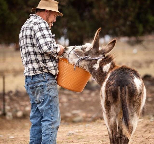 Quamby Park Farm Stay & Petting Zoo -