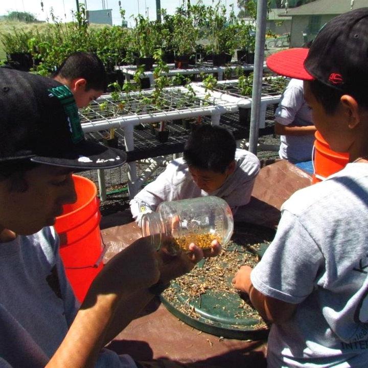Native plant propagation  (Natl Park Service)
