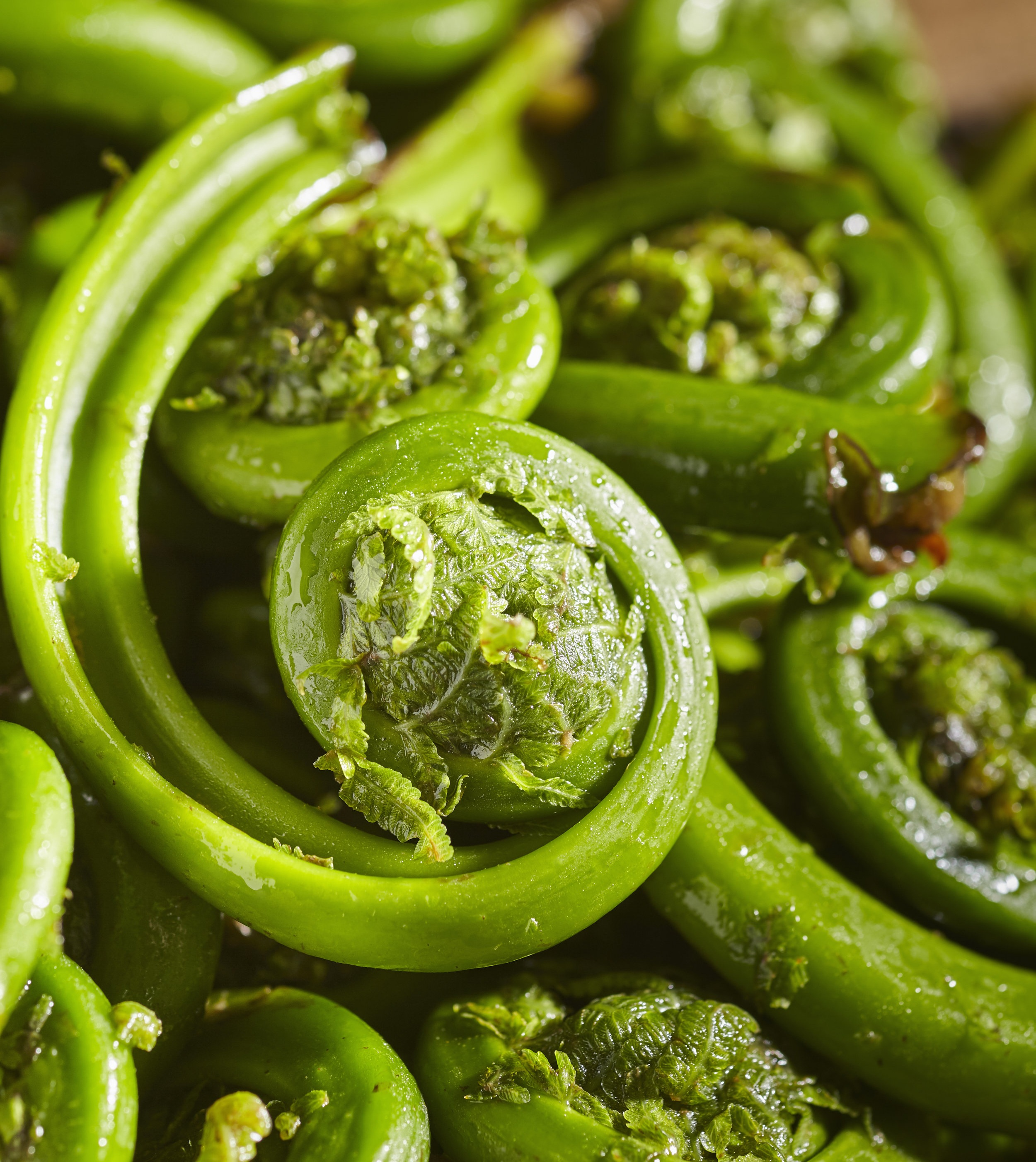 - This simple sauté is a lovely way to enjoy the earthy freshness of fiddlehead ferns.