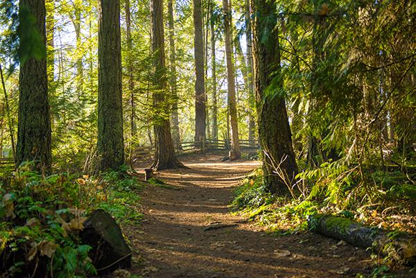 AdobeStock_191608084 Trails lo res.jpg