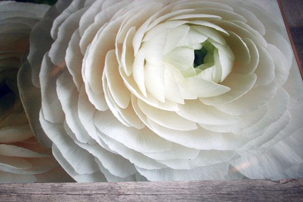 Erins-white-Flower-600x400.jpg