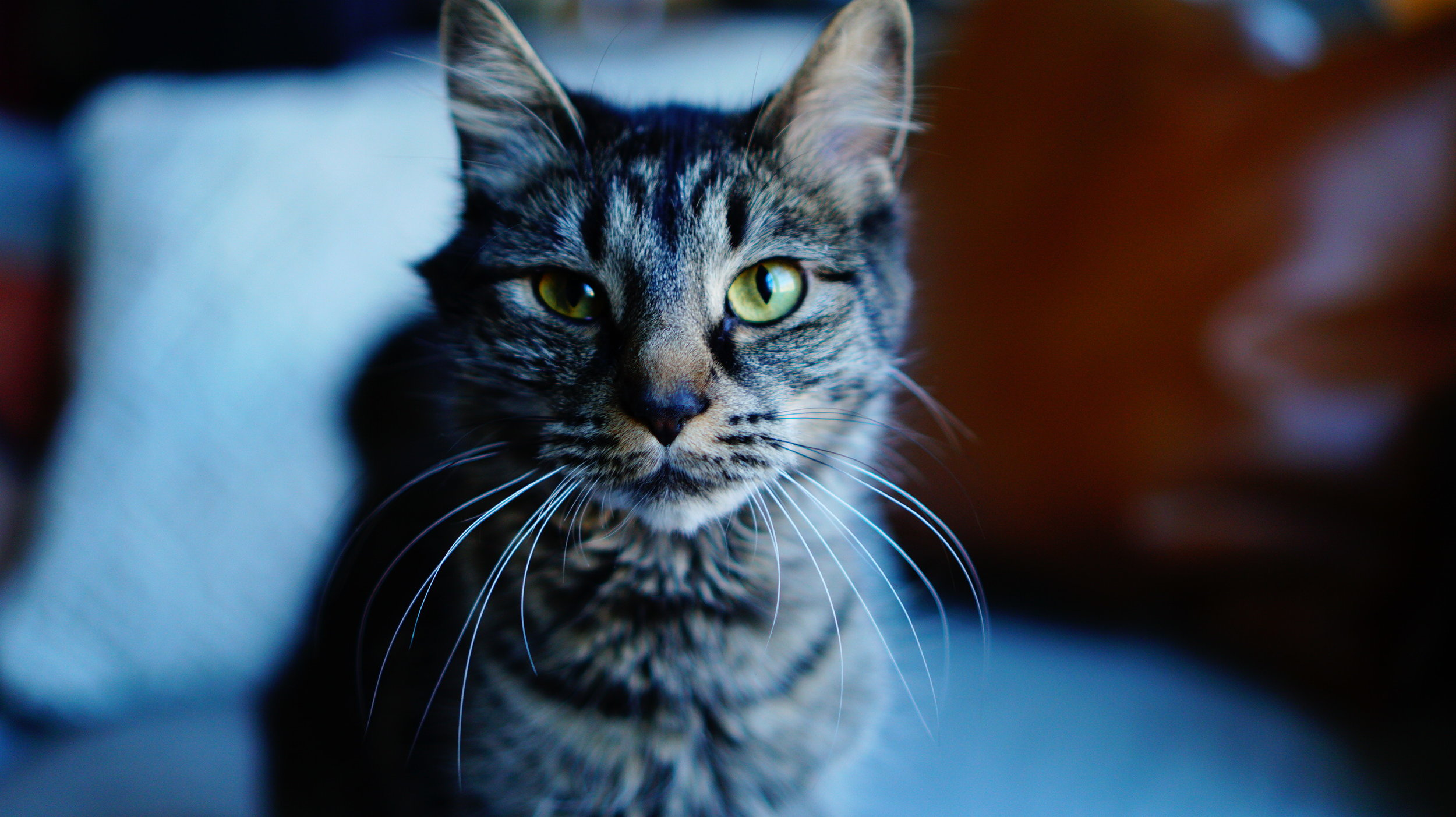Pet friendlyphoto studio -
