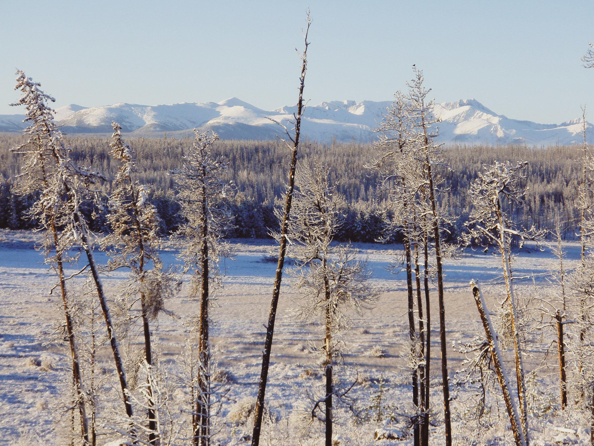 Meadow in winter.jpg