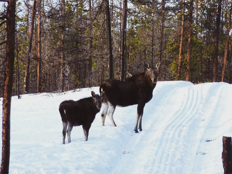 Moose on the trail.jpg