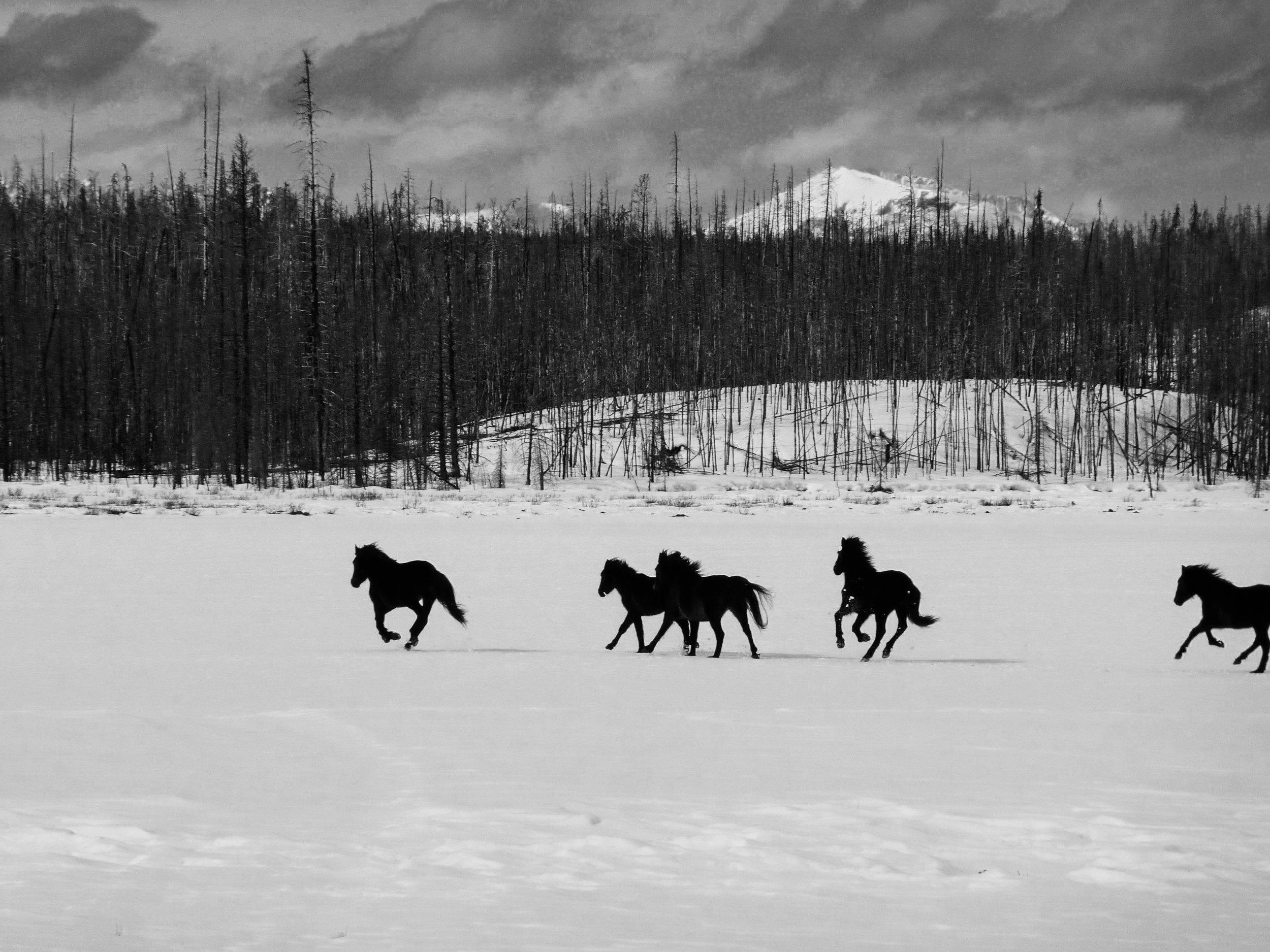 Wild Horses on meadow.jpg