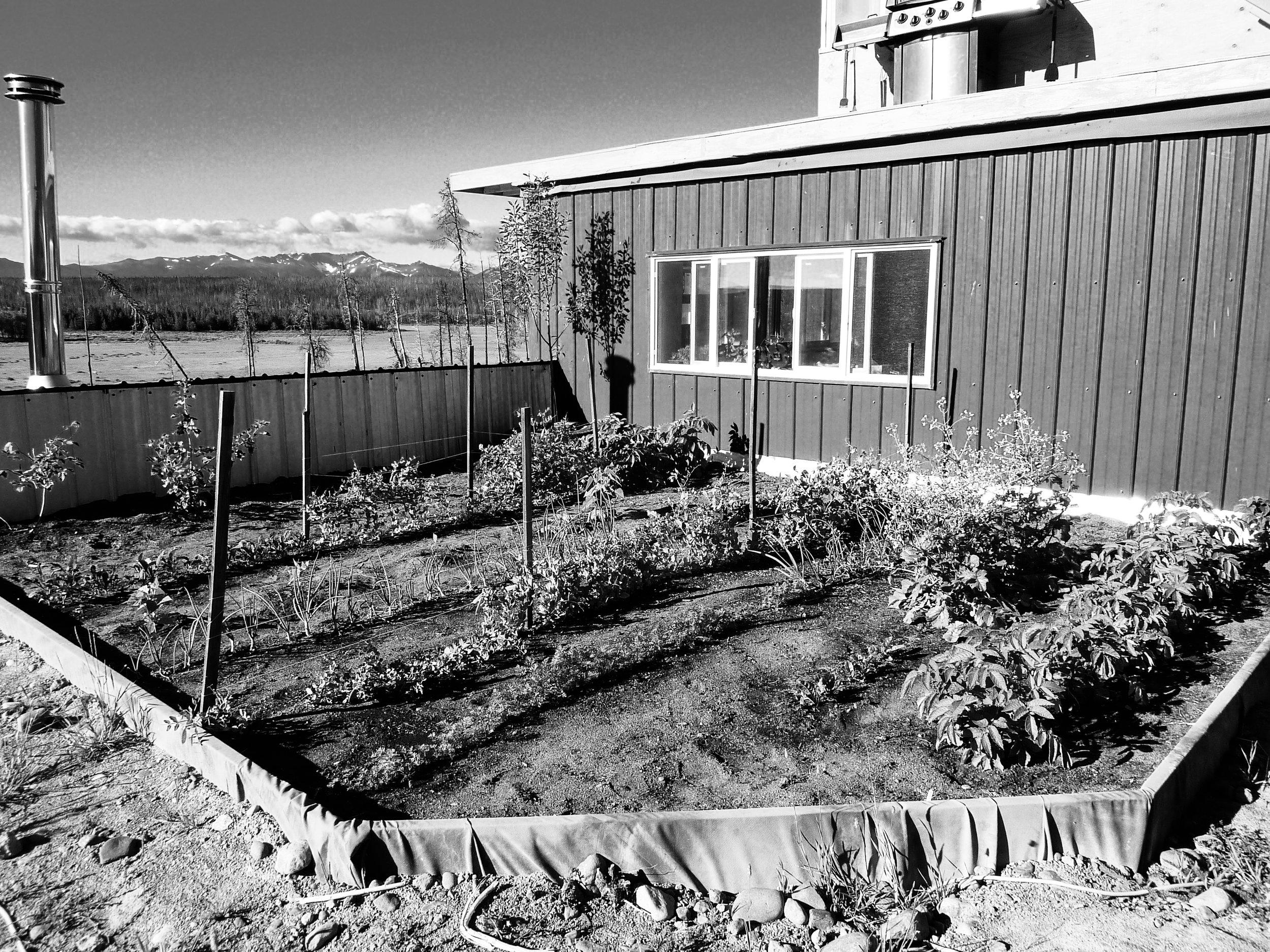 Garden on Roof-2.jpg