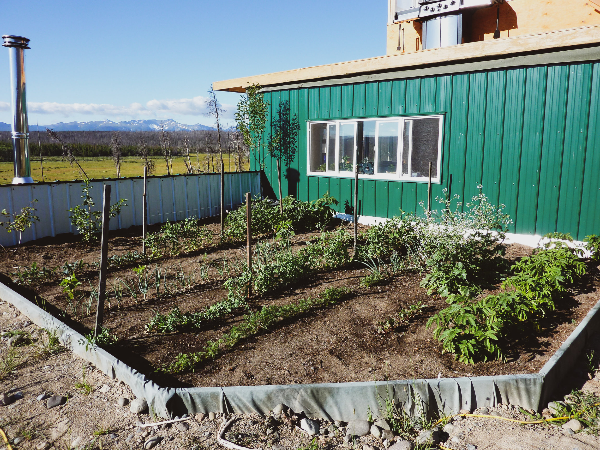 Garden on Roof.jpg
