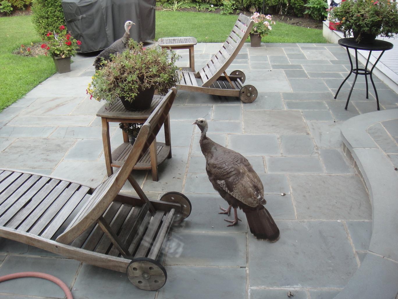 Avian Visitors -