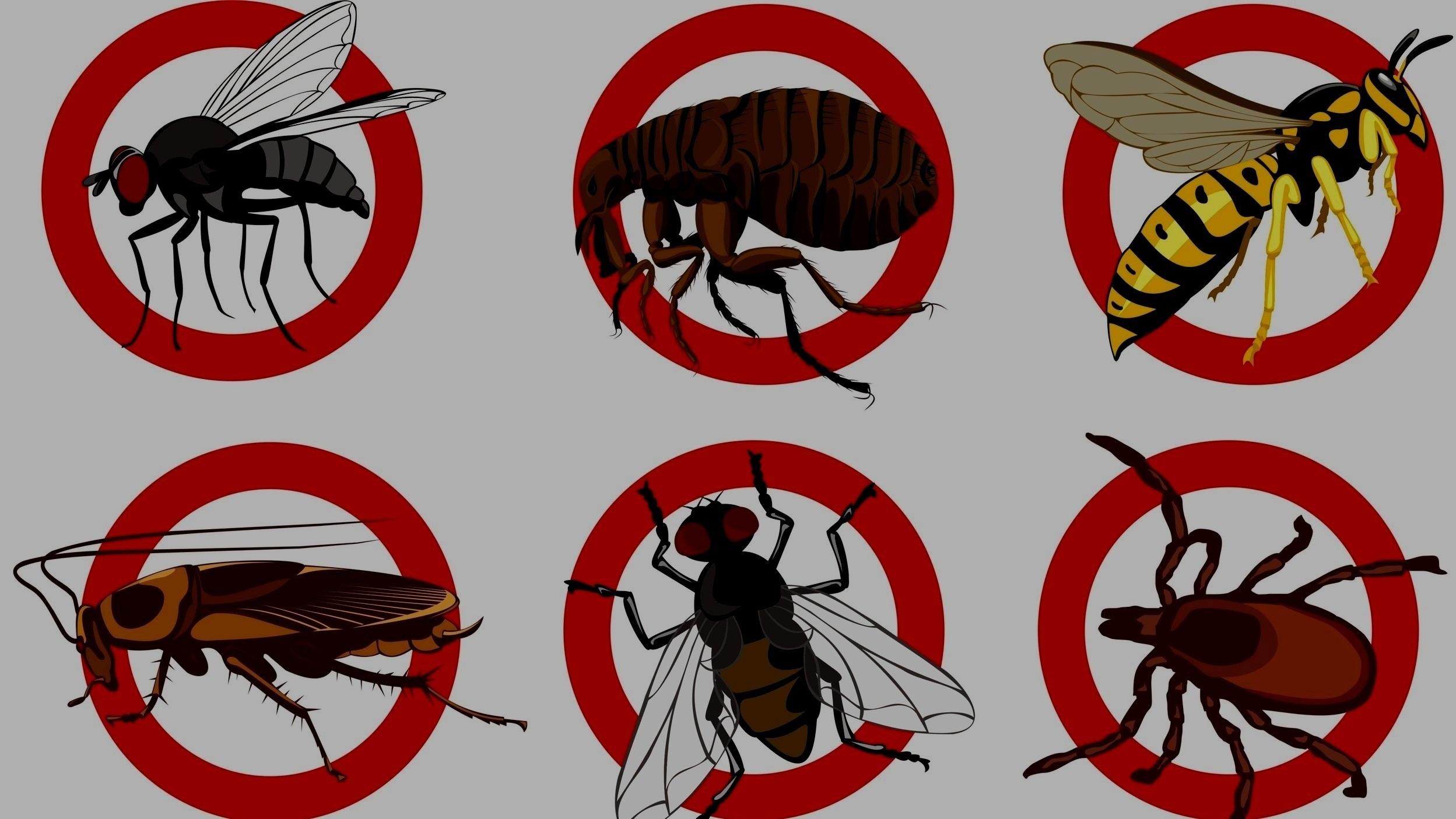 Pest Services -