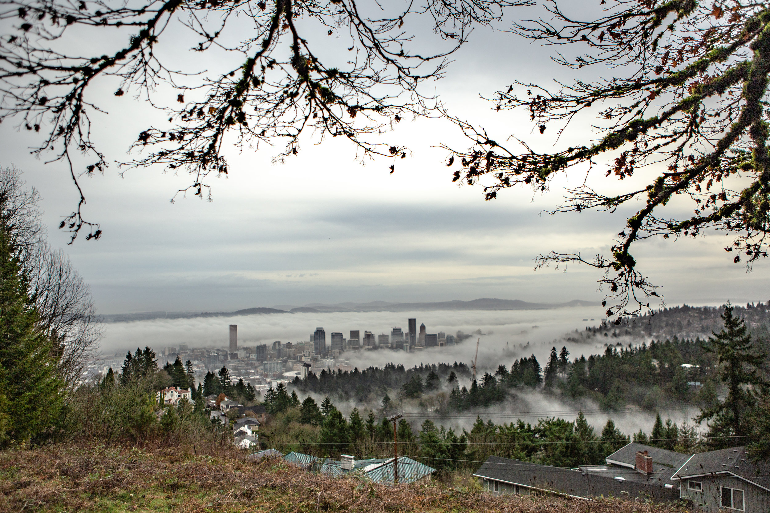 50 Shades of Gray:   A grey city encompassed with green charm, a view from a floating mansion in the hills.