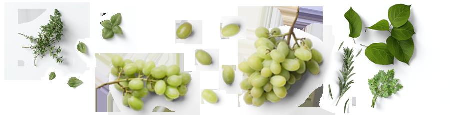 Sauvignon-Blanc.png
