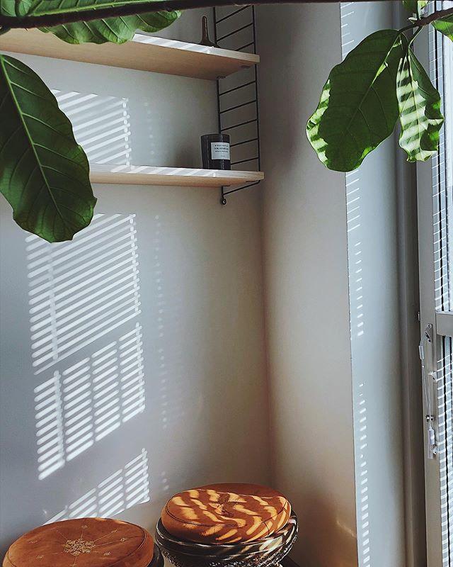 Sundays #sundaymood #shadowplay #ficus #interior