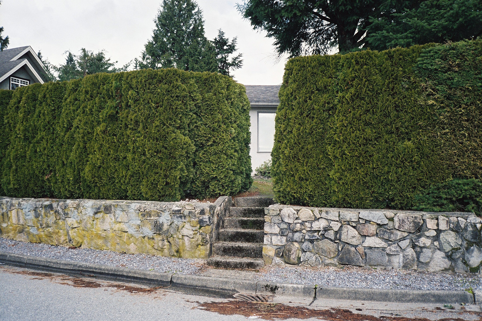 Steps up to a gap in the hedge © Tanya Clarke 2018