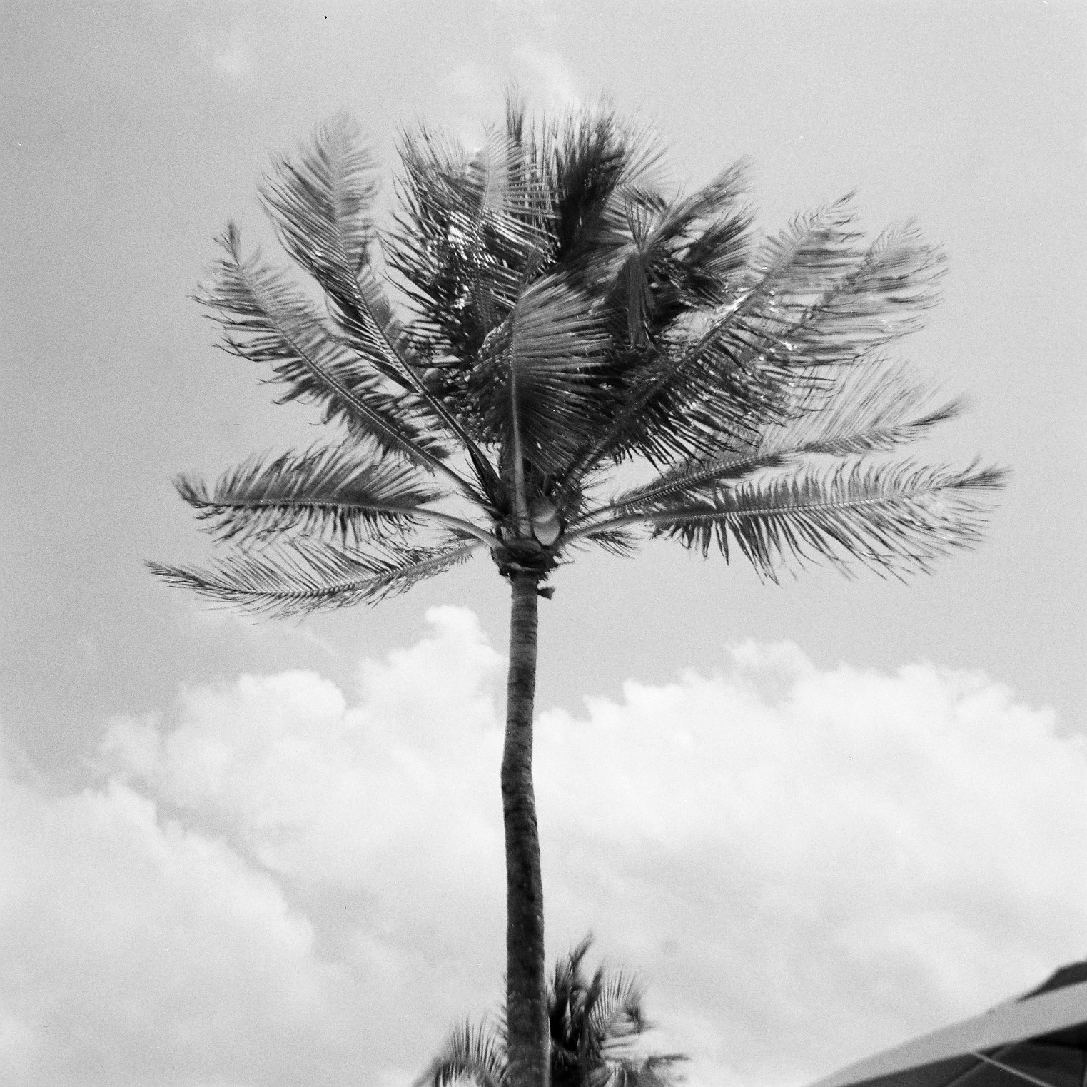 Palm tree, Mexico © Tanya Clarke 2018