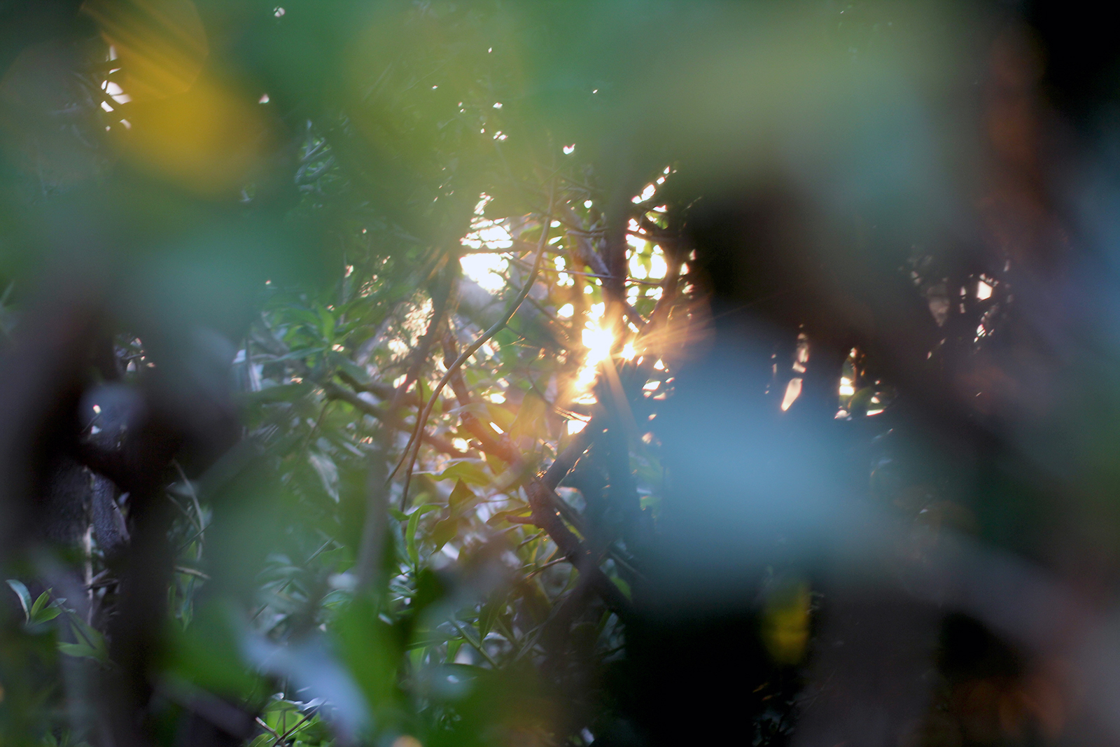 Sunlight through branches somewhere in France © Tanya Clarke 2015