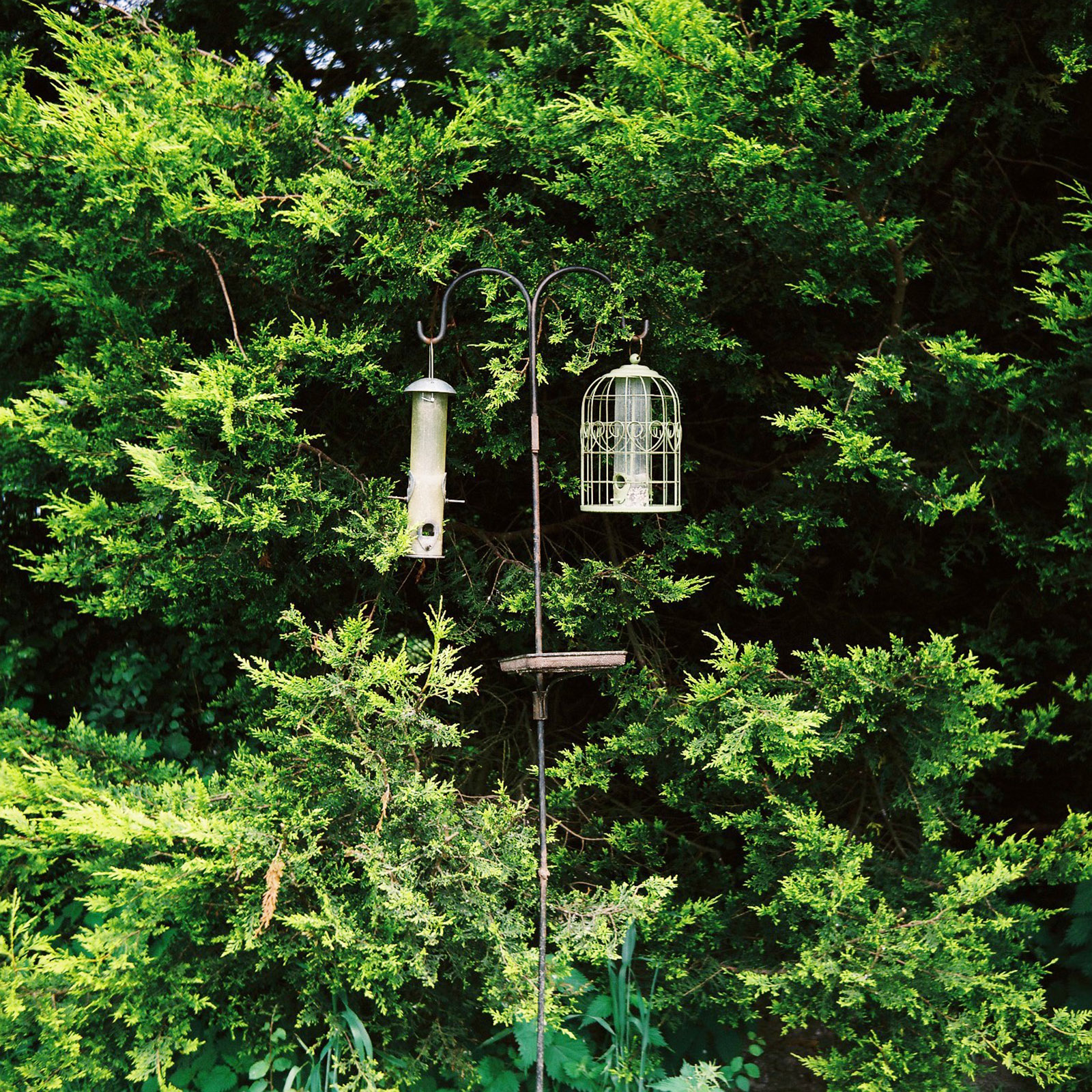 Two bird feeders, campsite, Devon UK © Tanya Clarke 2017