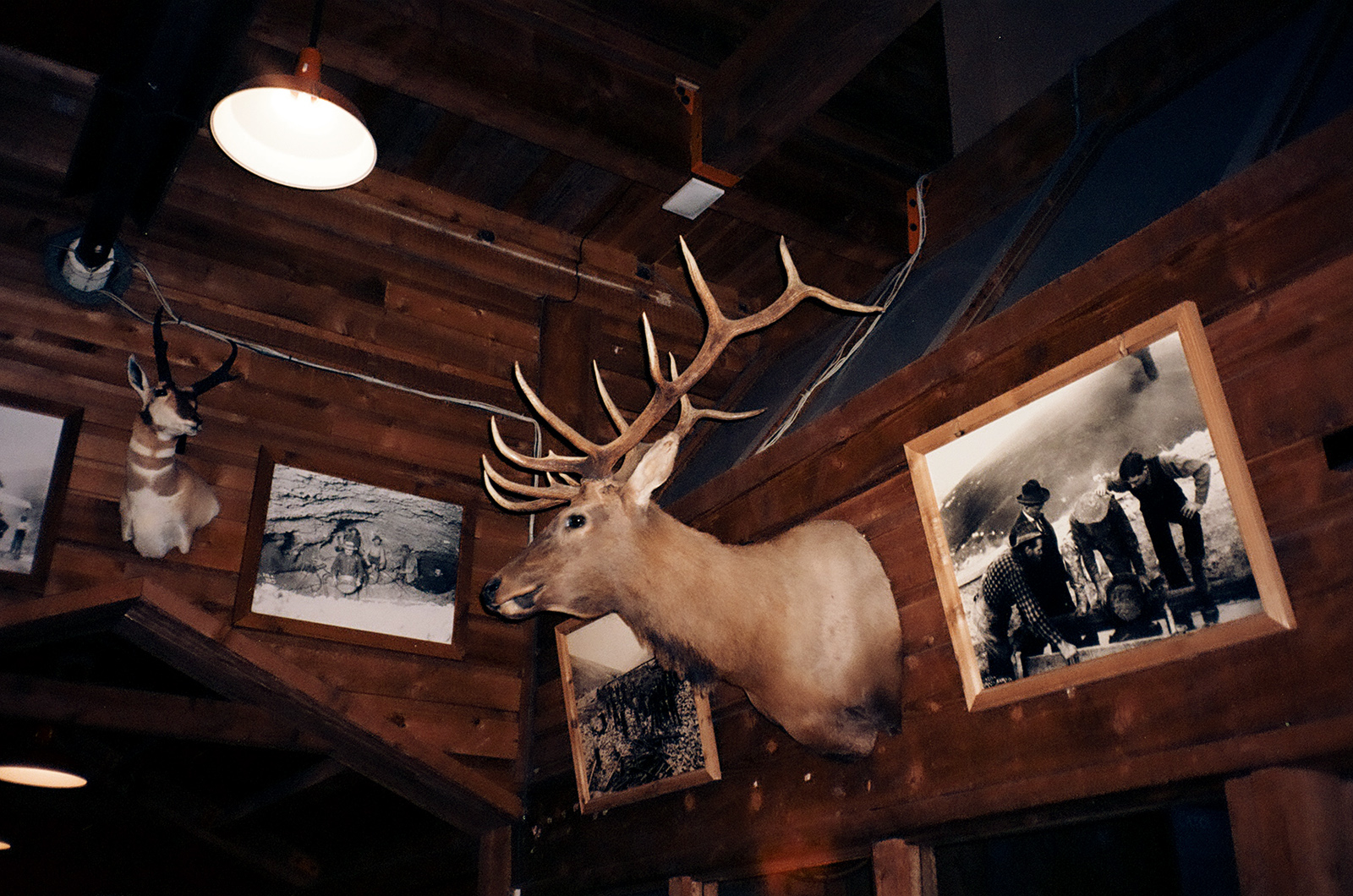 Stag head on wall