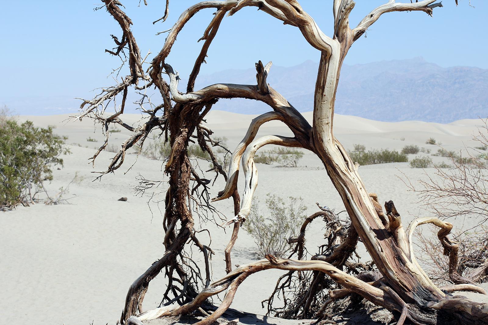 Death Valley, 2016