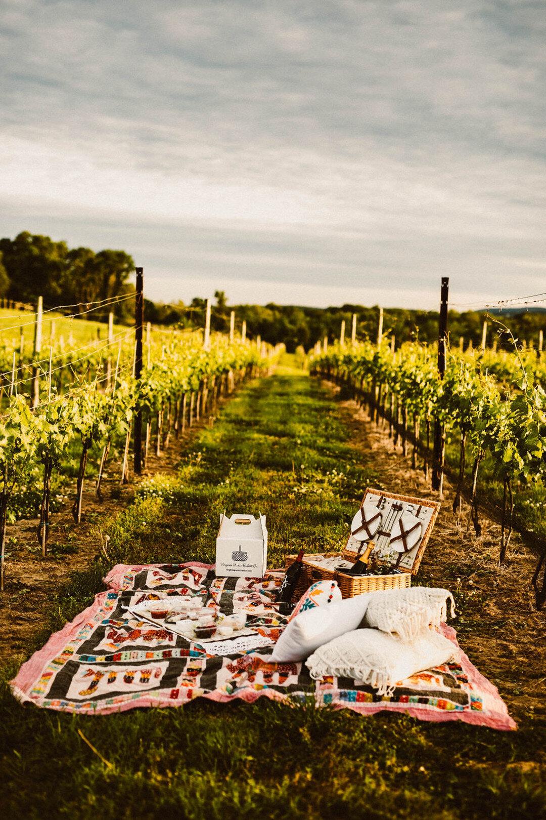 Romantic picnic in vineyard