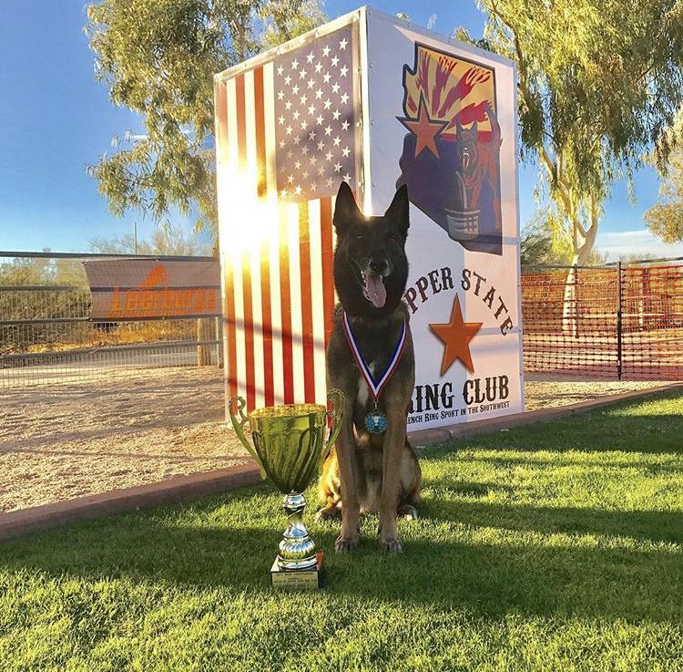 Training Camps Pine Ranch Dog Training Boarding