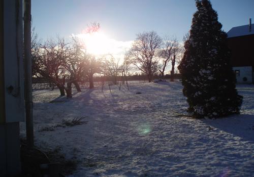 I den kalla kölden börjar det, de första bilderna här kommer från december.