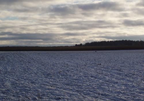 Här syns den på vintern