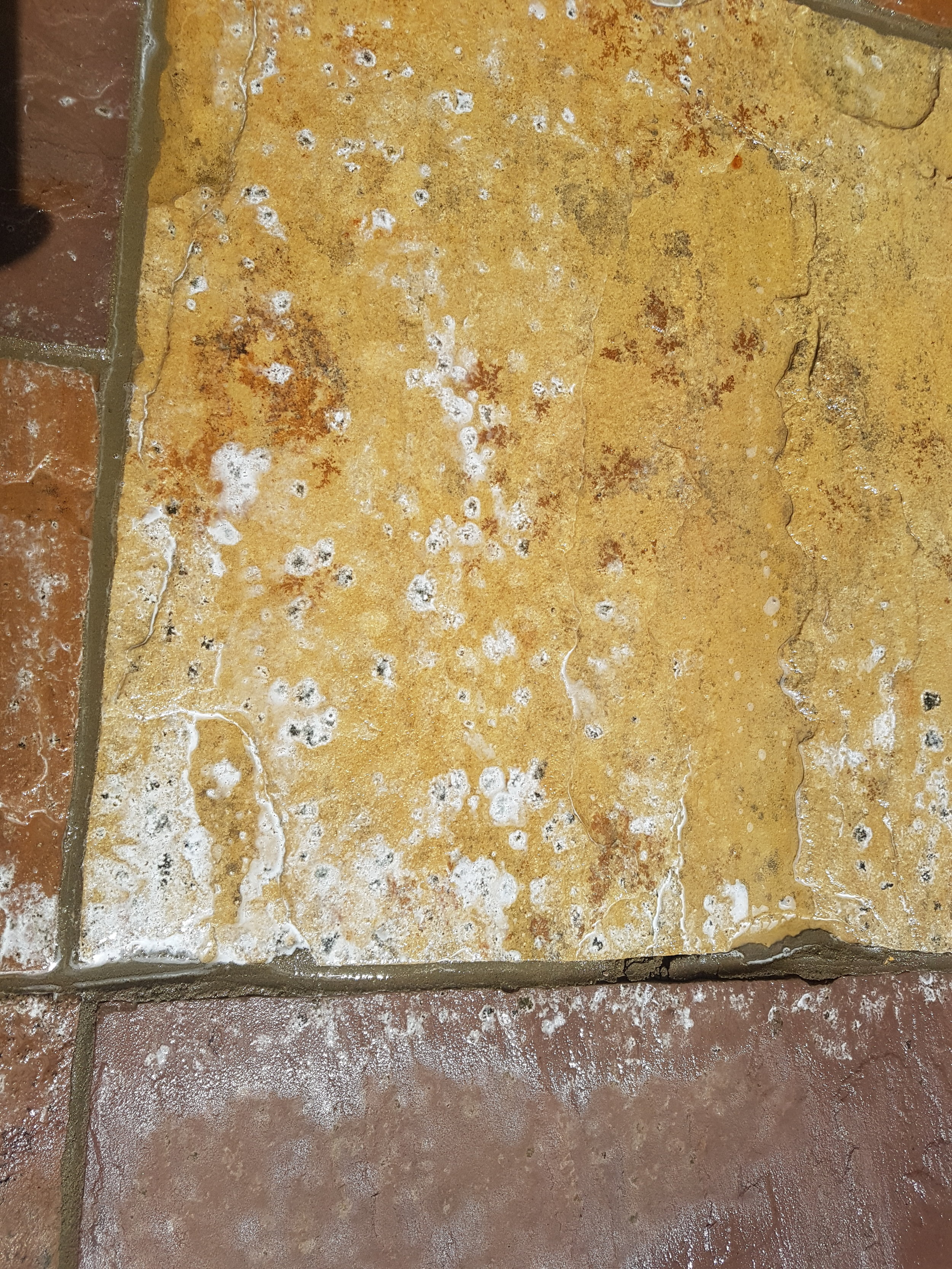 Horrible little black spots being eaten alive in minutes. - Contact Captain Jetwash if you want rid of those little black lichen spots from your patio.