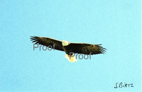 2. Soaring Eagle