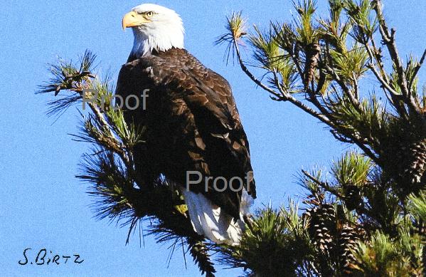 4. Majestic Eagle
