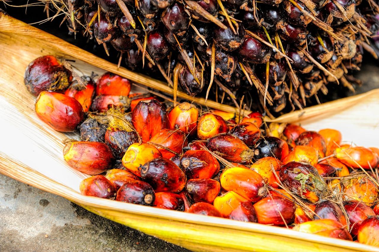 Produce-Background-Palm-Oil-Red-Fruit-Ripe-1464662.jpg