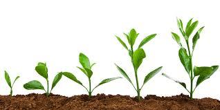 Growing -