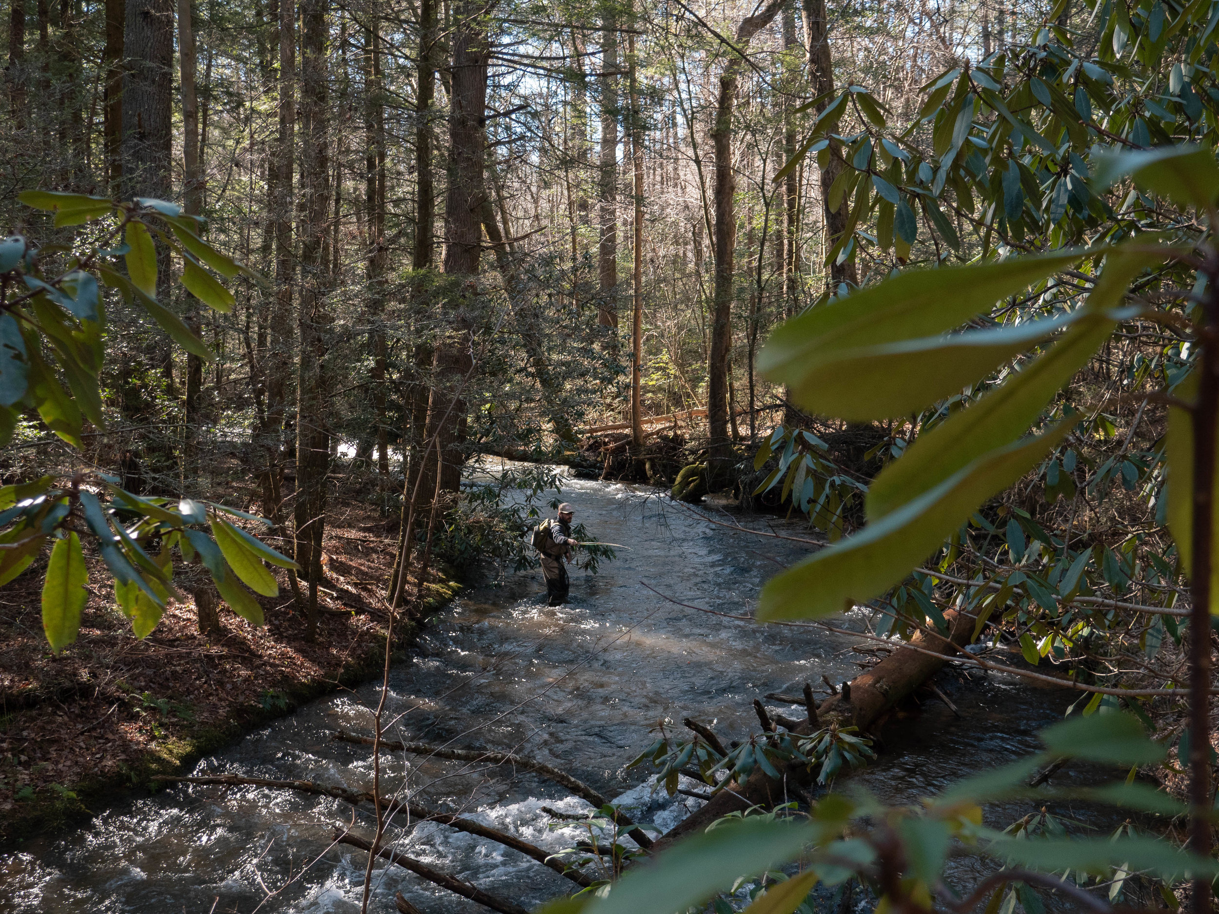 Waters Creek becomes a medium-sized flow in places, especially in the bends.