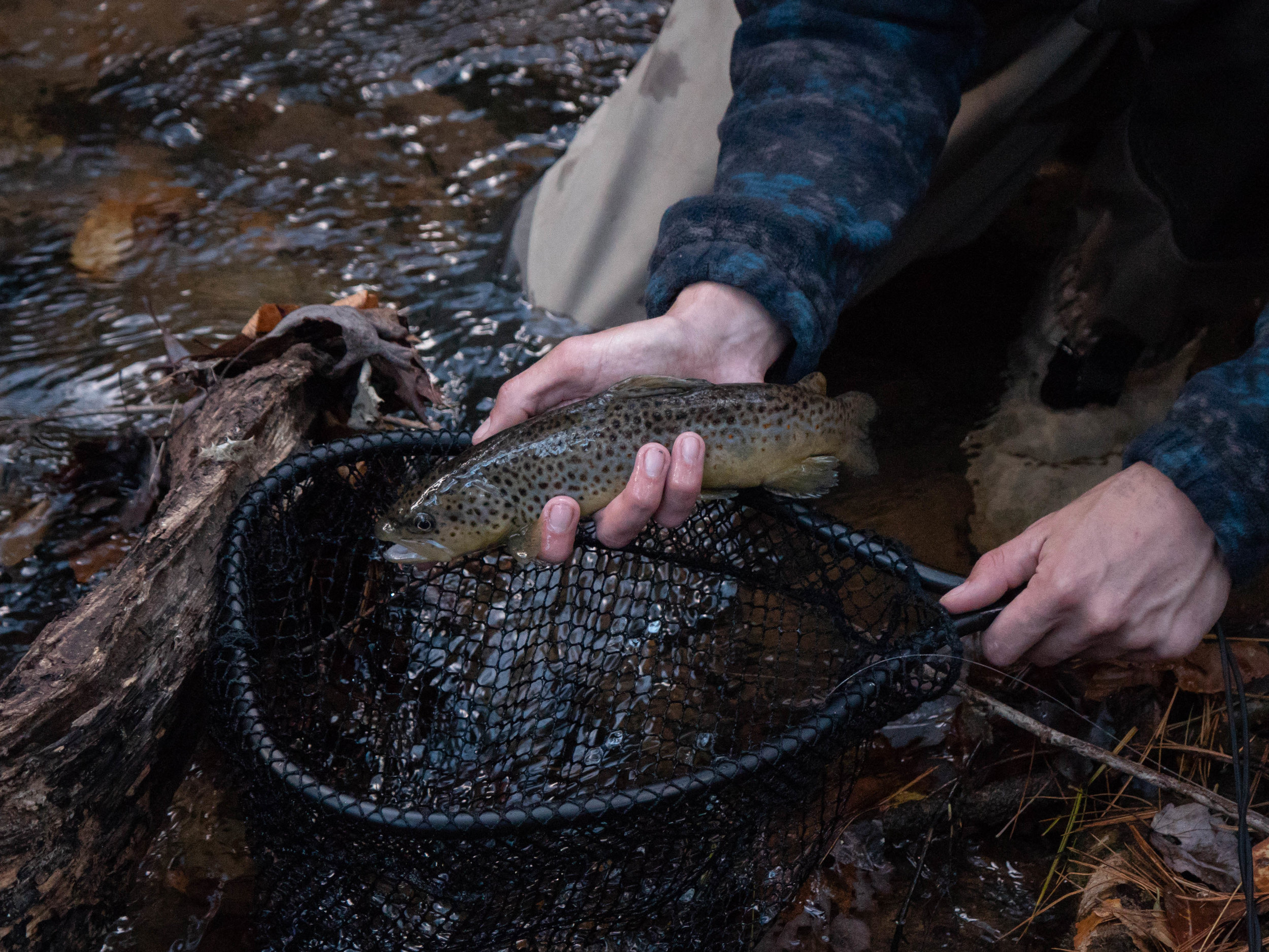 Dicks Creek Brown Trout Fishing-5.jpg