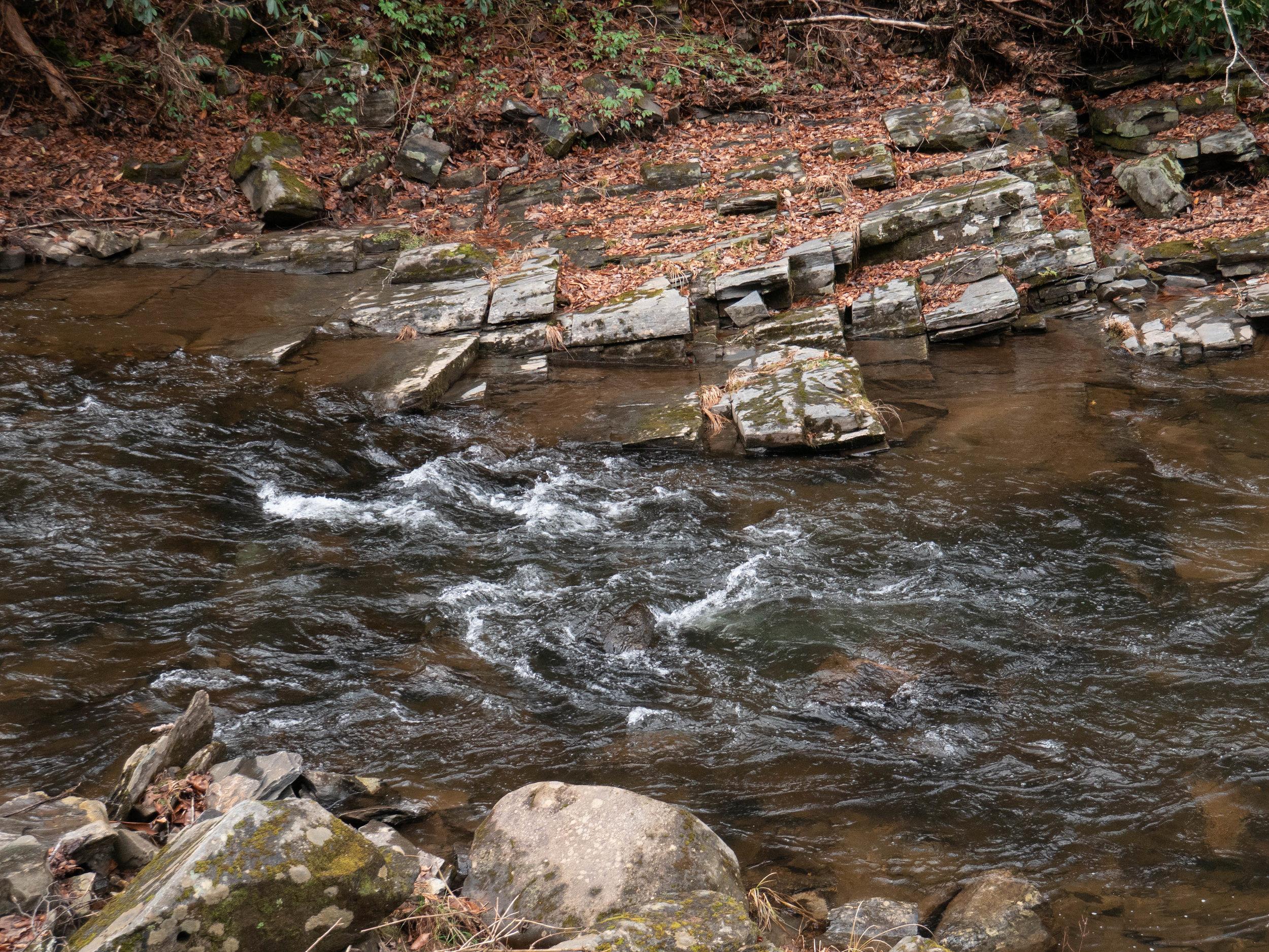 Dillsboro NC Trout Fishing-1.jpg
