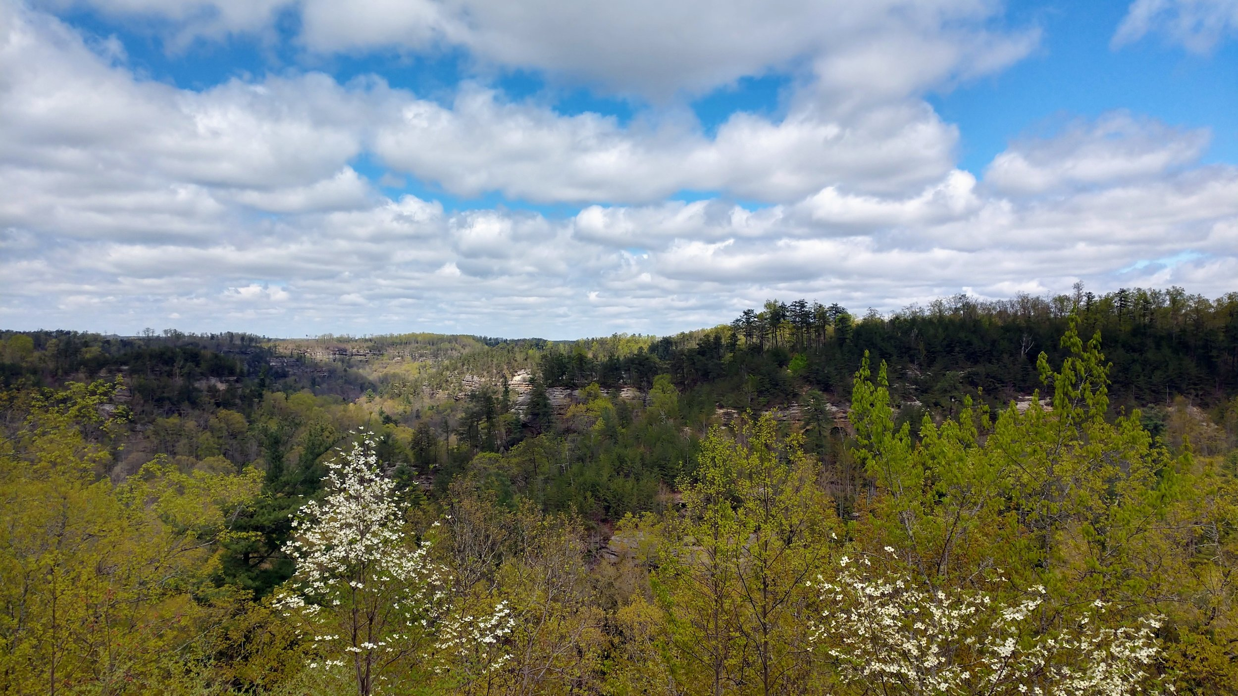 Spring at Red River Gorge - Tunnel Ridge Road Overlook.jpg