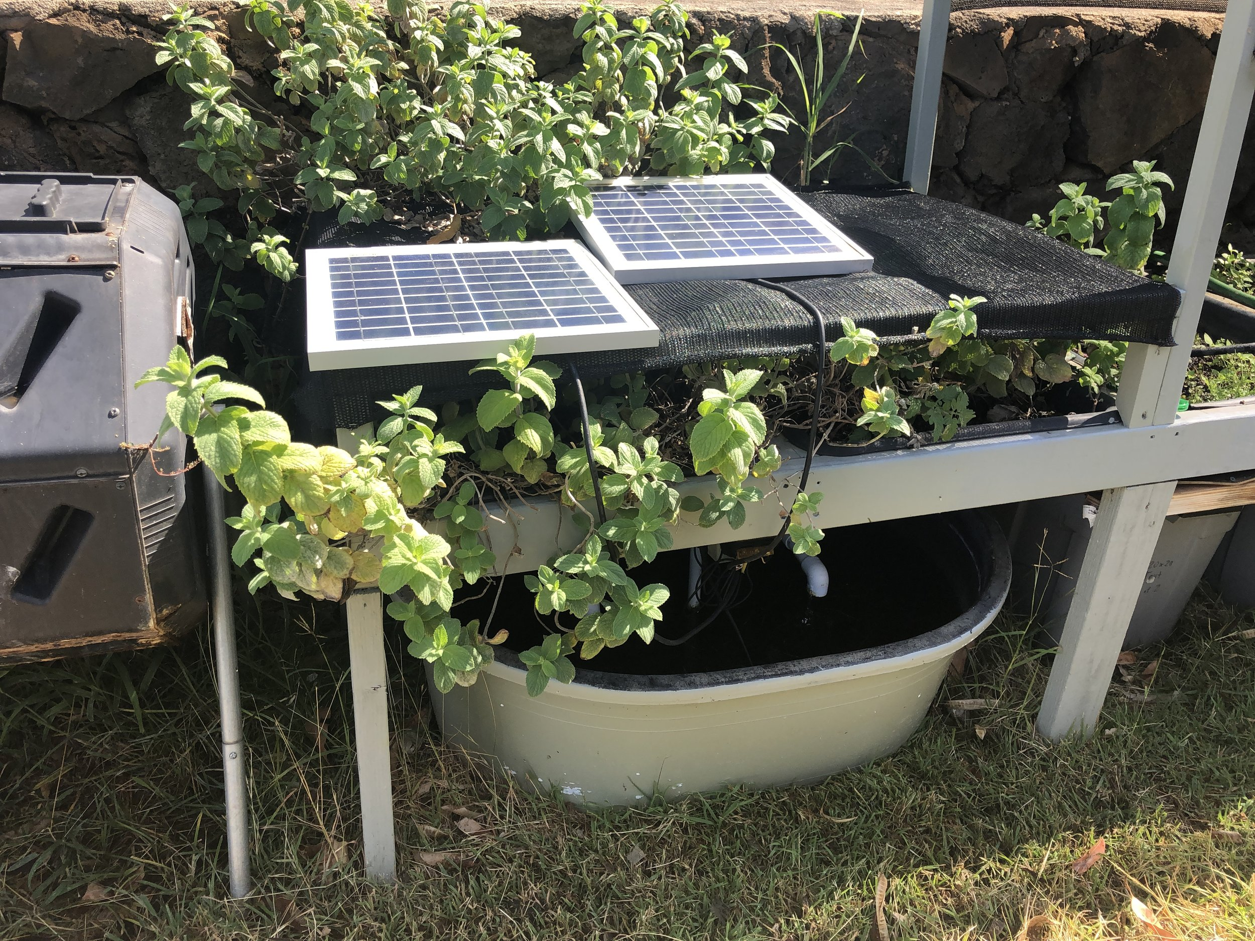 Aquaponics System (DIY) - How to make a solar powered Aquaponics system.