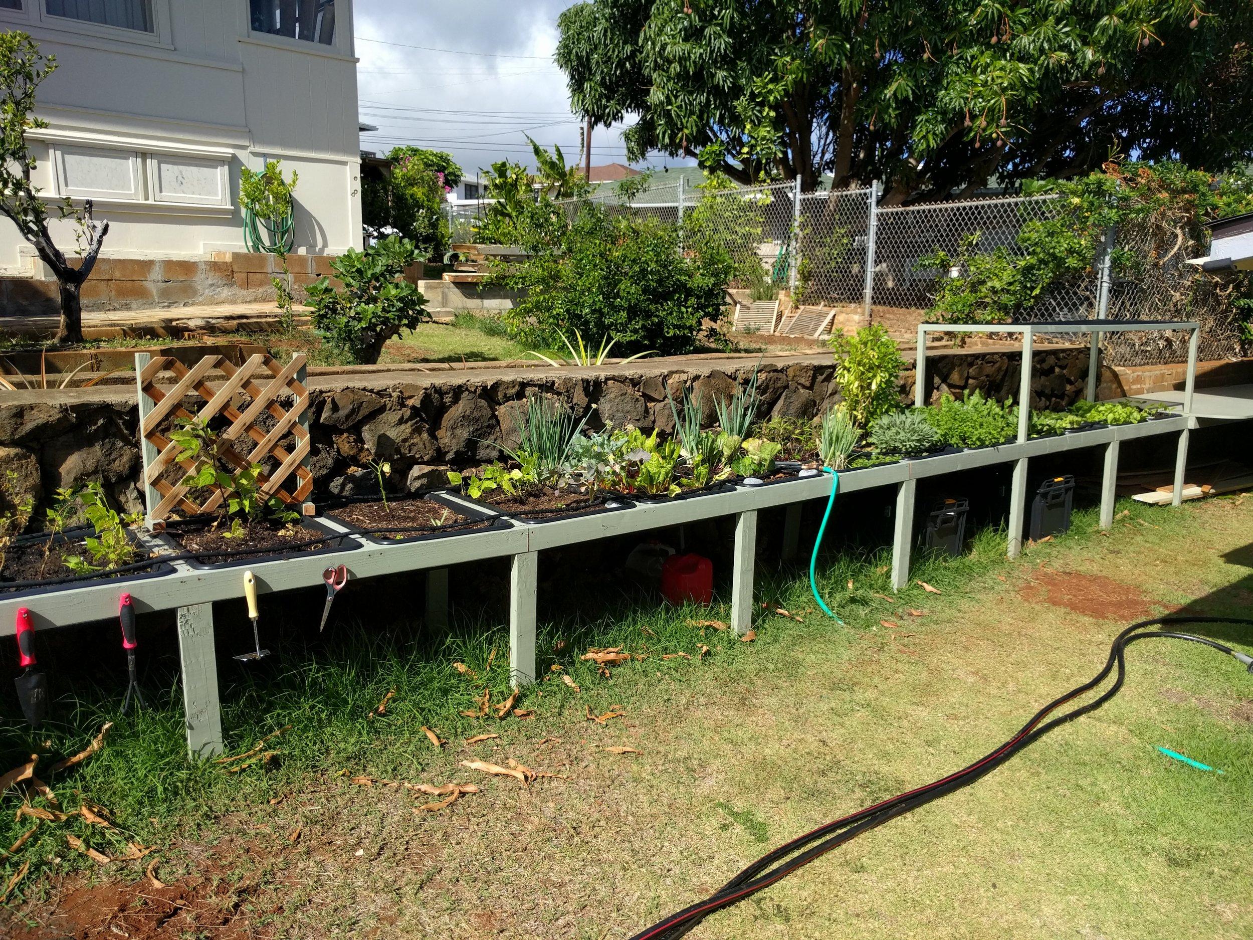 Garden in plumber boxes