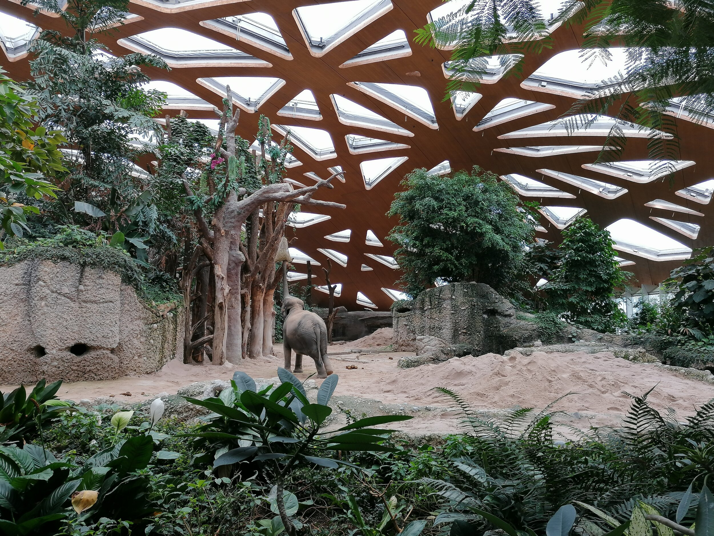 Elefant im Kaeng Krachan