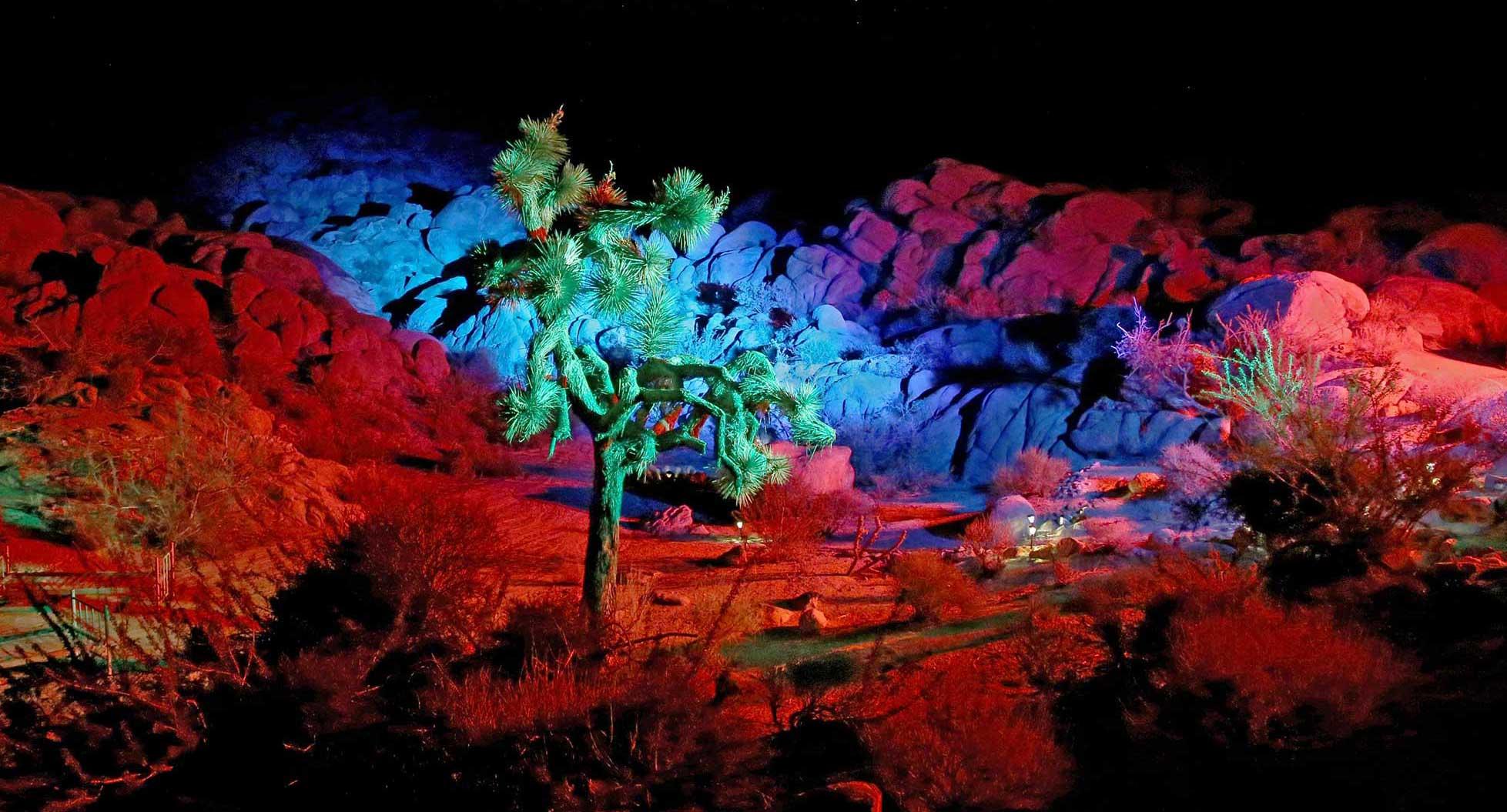 Shadow-Ranch-JTP-green-tree-red-surround-_5713.jpg