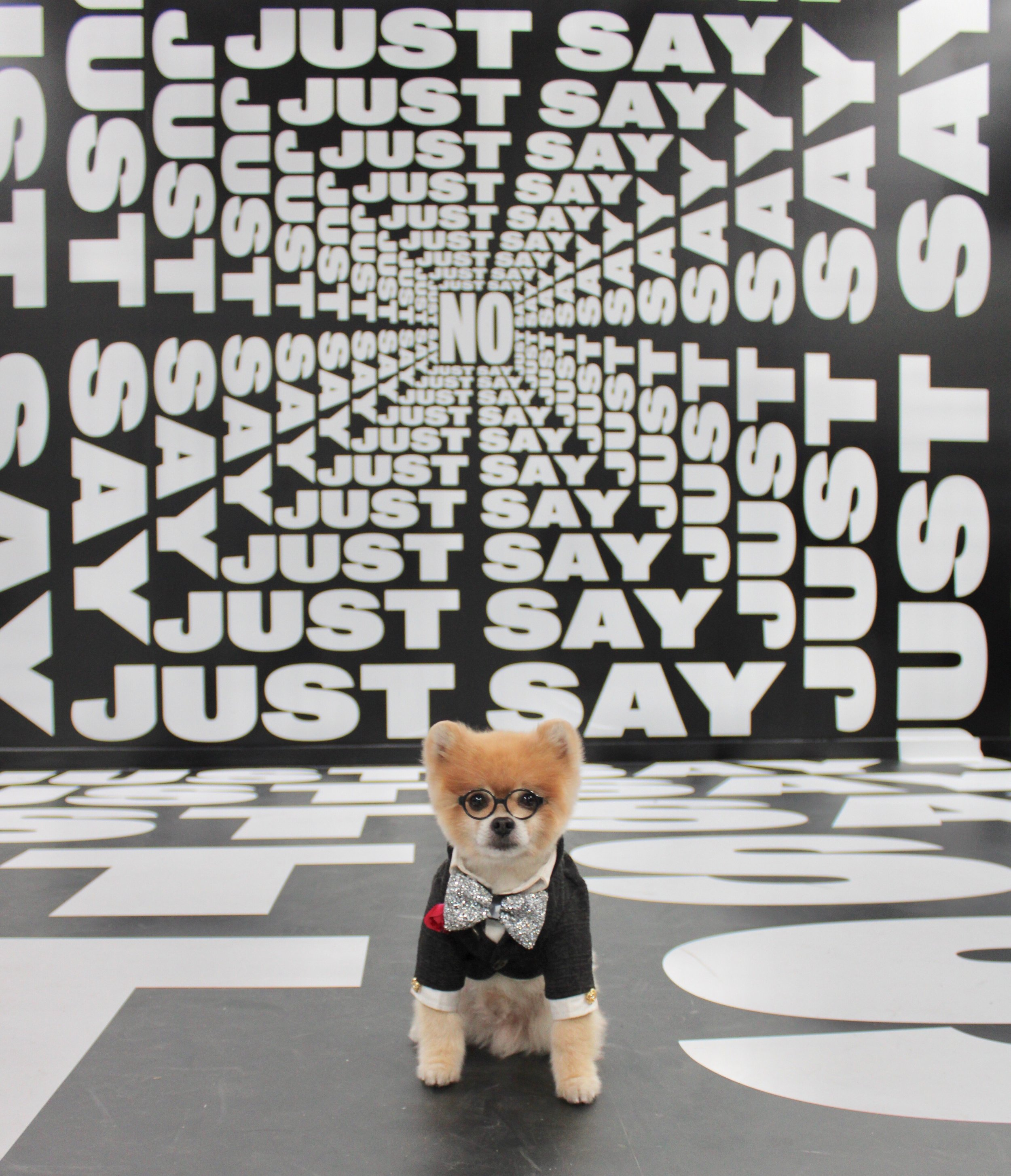 Average Socialite's guest Bentley the Pom LA attends the exclusive preview of Museum of Weed in LA