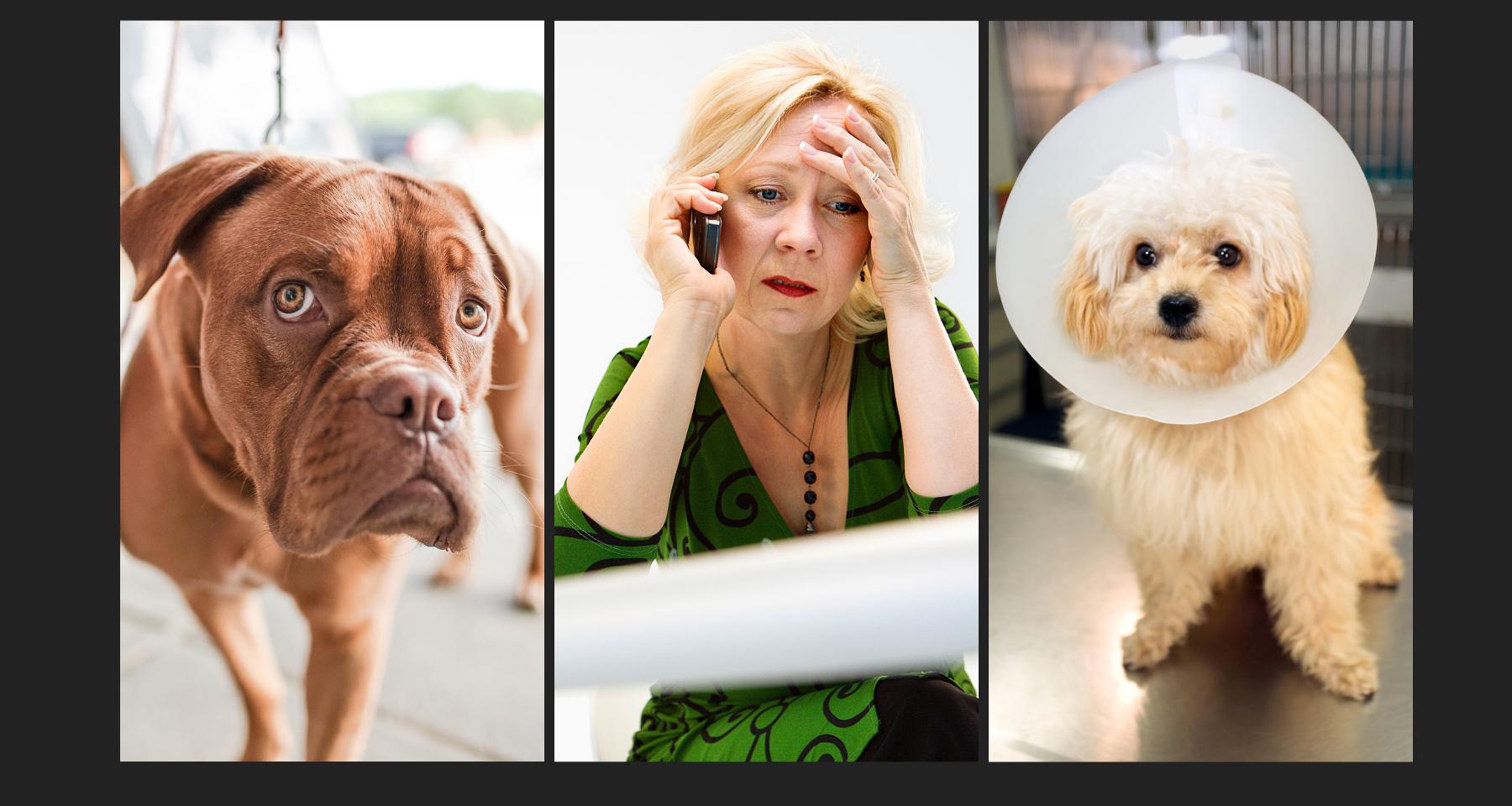 Atlanta-On-Demand-Dog-Walking-Pet-Sitting-professional-dog-walkers
