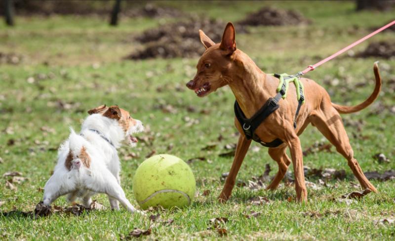 midtown-atlanta-dog-walking-off-leash-dangerous.png
