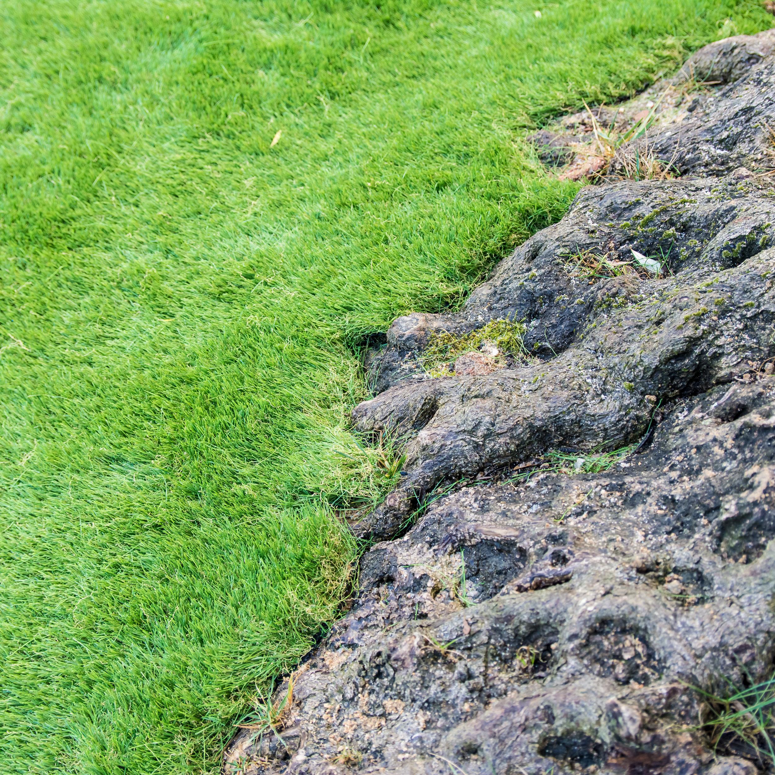 MEDIO AMBIENTE - Toda nuestra gama de productos, además de poder convivir perfectamente con la vegetación autóctona, supone un ahorro de agua considerable con respecto al césped natural.