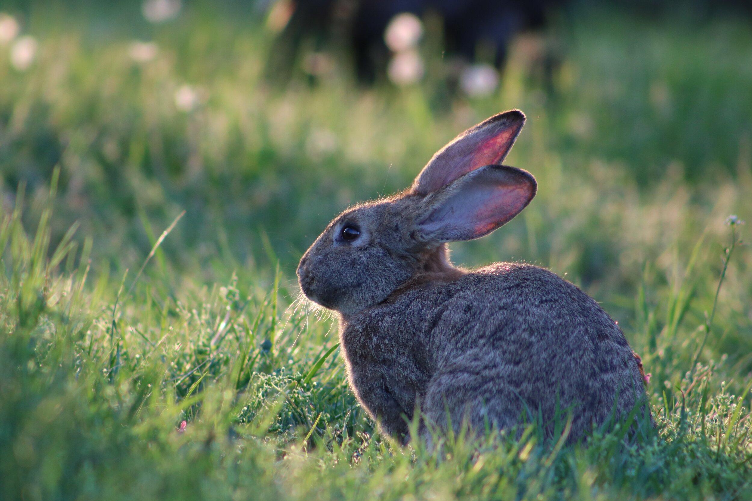 hare look-unsplash.jpg