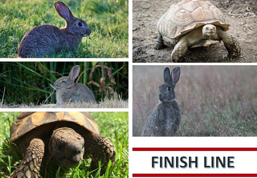 Tortoise Hare race.jpg
